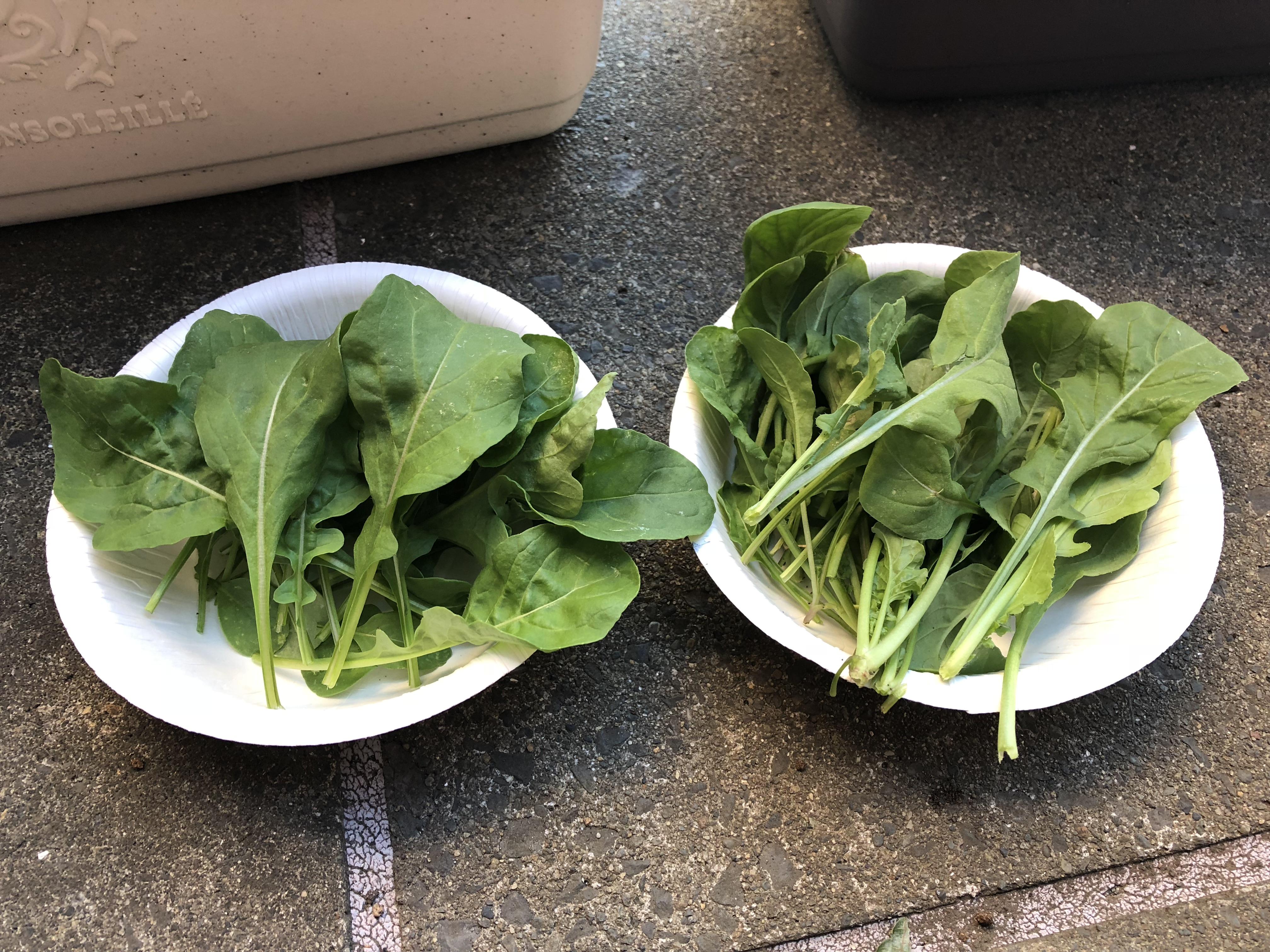 つるぽかのお水で育てた野菜